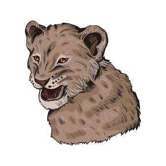 Bambino animale leone, ritratto di schizzo isolato animale esotico. illustrazione disegnata a mano.