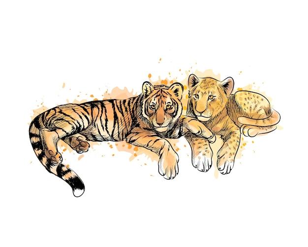 Cucciolo di leone e cucciolo di tigre da una spruzzata di acquerello, schizzo disegnato a mano. illustrazione di vernici