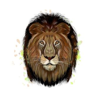 Ritratto di testa di leone da una spruzzata di acquerello, disegno colorato, realistico. illustrazione vettoriale di vernici