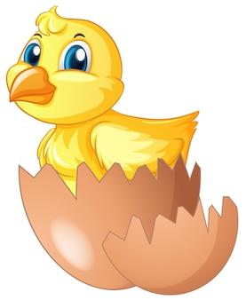 Il pulcino esce dall'uovo
