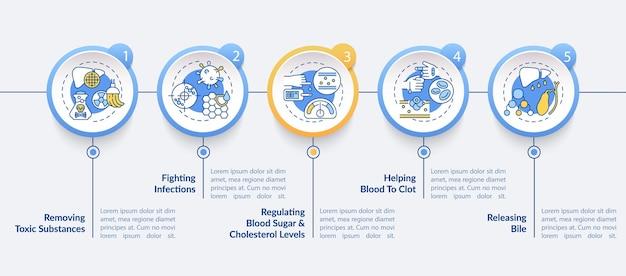 Modello di infografica ruoli del fegato. elementi di design di presentazione di rimozione di sostanze tossiche.