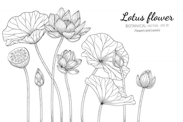 Illustrazione botanica disegnata a mano del fiore di loto con la linea arte