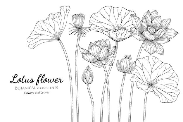 Illustrazione botanica disegnata a mano del fiore e della foglia di loto con la linea arte su sfondi bianchi.