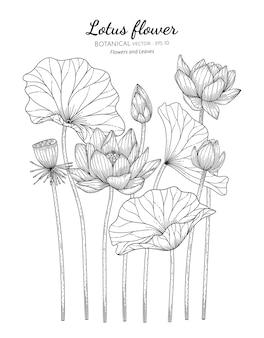 Illustrazione botanica disegnata a mano del fiore e della foglia di loto.