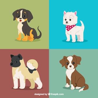 Bella confezione di cuccioli