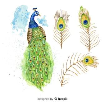 Lovely pavone in stile acquerello