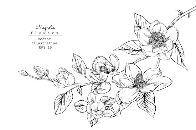 Disegni di fiori di magnolia.