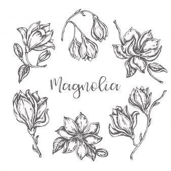 Fiori di magnolia che disegnano insieme disegnato a mano dell'inchiostro