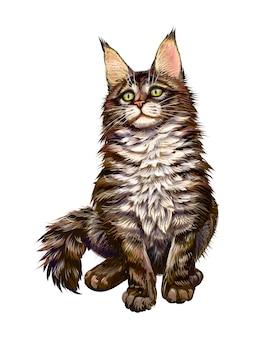 Gatto maine coon seduto e guardando lontano su uno sfondo bianco. illustrazione vettoriale