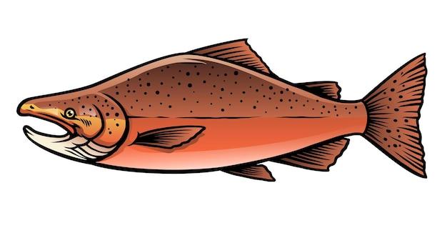 Pesce salmone chinook maschio