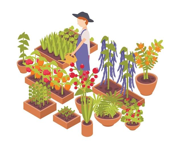 Coltivatore maschio che innaffia verdure e fiori che crescono piantatrici isolate su bianco