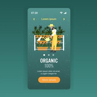 Uomo agricoltore irrigazione cannabis industriale piantagione di canapa coltivazione di marijuana pianta consumo di droga concetto di agro-alimentare smartphone schermo mobile app piena lunghezza copia spazio