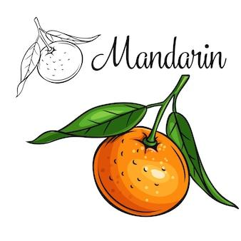 Icona di disegno mandarino