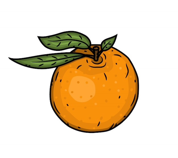 Mandarino isolato su uno sfondo bianco.