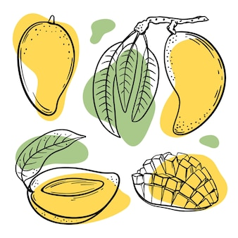 Schizzi di mango con schizzi di colore giallo e verde su sfondo bianco illustrazione