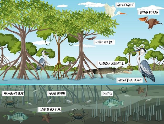 Scena del paesaggio della foresta di mangrovie di giorno con molti animali diversi