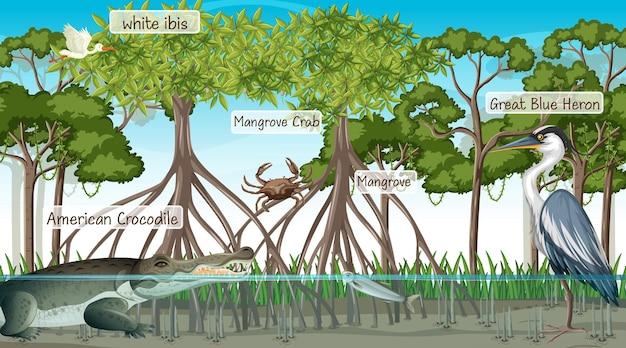 Scena della foresta di mangrovie e animali con nome dell'etichetta