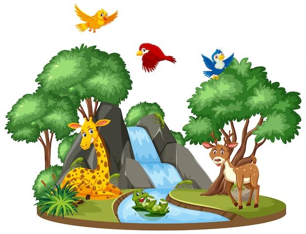 Molti animali alla cascata