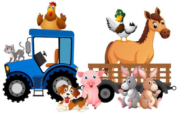Molti animali da allevamento che guidano trattore su bianco