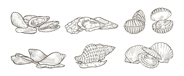 Molti tipi di illustrazioni disegnate a mano di crostacei