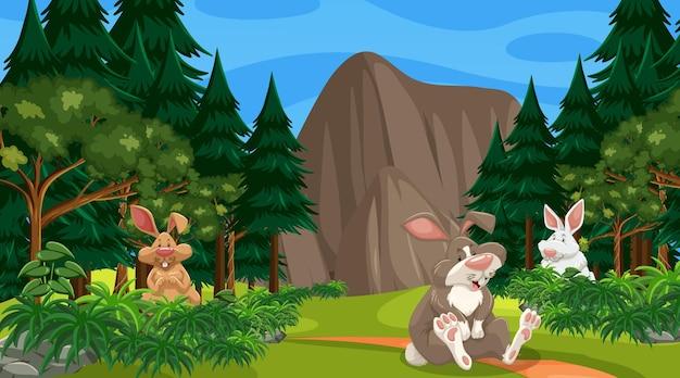 Molti conigli nella scena della foresta con molti alberi