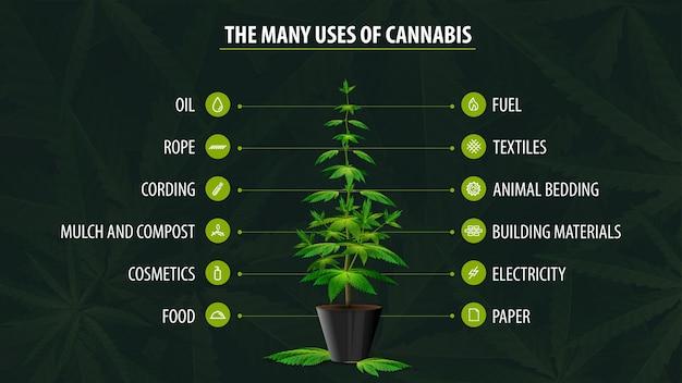Molti usi della canapa, poster con infografica sugli usi della cannabis e greenbush della pianta di cannabis su sfondo verde con foglie di cannabis