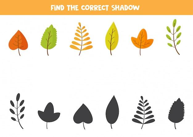 Abbina le foglie autunnali e le loro ombre. puzzle logico.