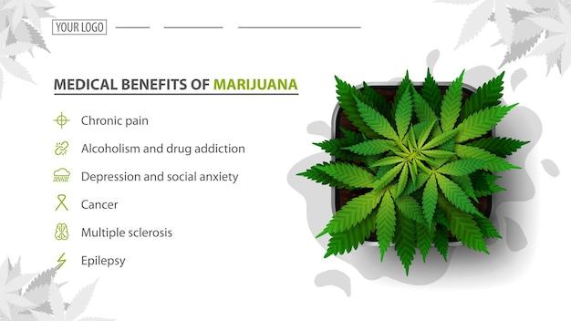 Benefici medici della marijuana, baner bianco per sito web con cespuglio di cannabis in una pentola, vista dall'alto. benefici usi della marijuana medica