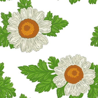Medical feverfew flowers seamless pattern