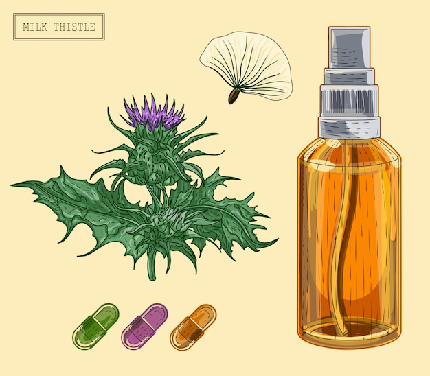 Pianta e bottiglia e pillole mediche del cardo selvatico di latte