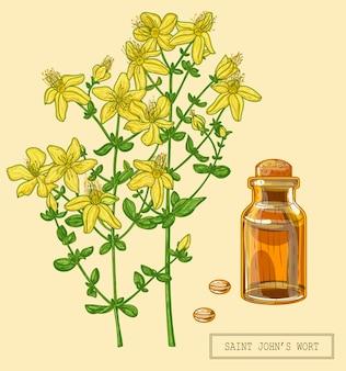 Erba medica di san giovanni in fiore pianta piena, illustrazione botanica disegnata a mano in uno stile moderno alla moda