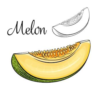 Icona di disegno del melone