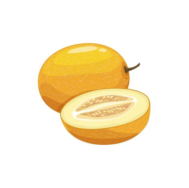 Vettore di frutta di melone, pianta da giardino matura, prodotto biologico intero e mezzo. succosa frutta di fattoria naturale sana con gambo secco e buccia gialla incrinata. elemento di design del fumetto isolato su sfondo bianco