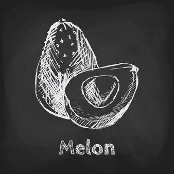 Elemento di utilizzo del design disegnato a mano dell'illustrazione di schizzo del melone