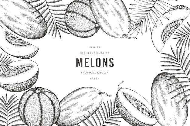 Meloni con modello di foglie tropicali. illustrazione di frutta esotica disegnata a mano. banner di frutta in stile retrò.