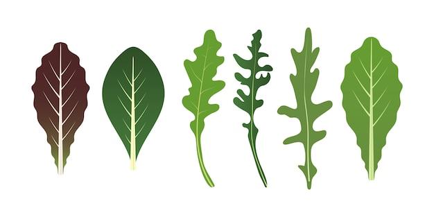 Mix di foglie di insalata. foglia di rucola, spinaci e lattuga. illustrazione vettoriale impostato in stile.