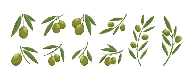 Set design moderno logo oliva