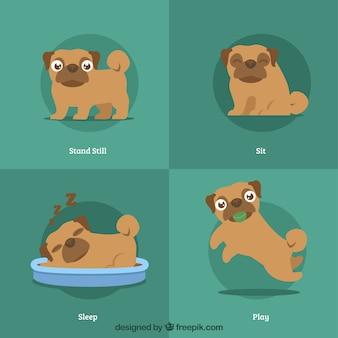 Confezione moderna di pugs cute