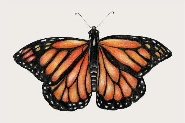 Farfalla monarca vintage vettoriale disegnato a mano