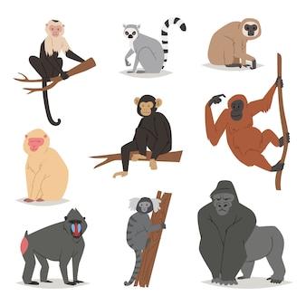 Set di scimmie simpatico macaco animale personaggio dei cartoni animati di scimmia di scimmie primate scimpanzé, gibbone e babbon illustrazione su bianco