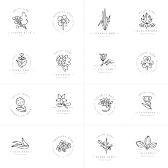 Modelli ed emblemi di scenografia monocromatica - erbe e spezie sane. diverse piante medicinali e cosmetiche. loghi in stile lineare alla moda.