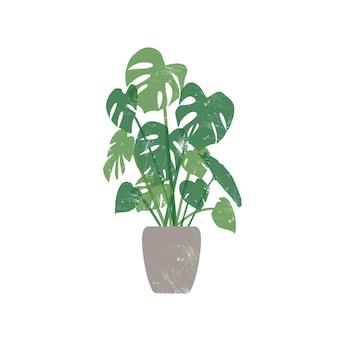 Monstera nell'illustrazione piana del vaso di ceramica