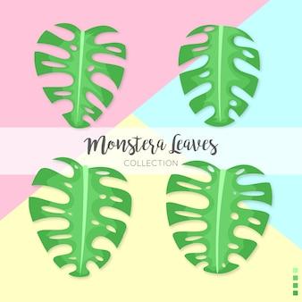Collezione di foglie di monstera