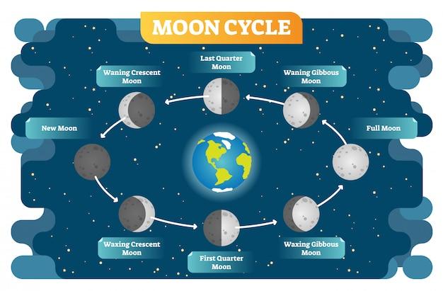 Diagramma dell'illustrazione di vettore del ciclo di fase lunare