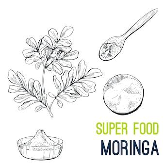 Moringa. disegnato a mano super cibo