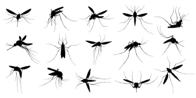 Insieme della siluetta della zanzara
