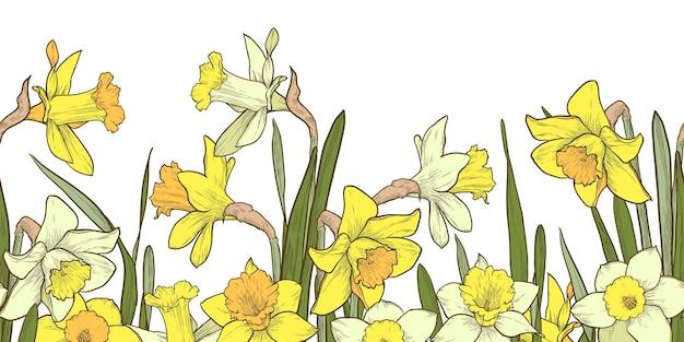 Bordo senza giunte floreale multicolor su priorità bassa bianca. illustrazione di vettore di narcisi disegnati a mano.