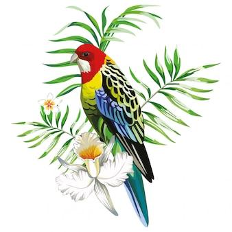 Pappagallo multicolore con piante e fiori tropicali