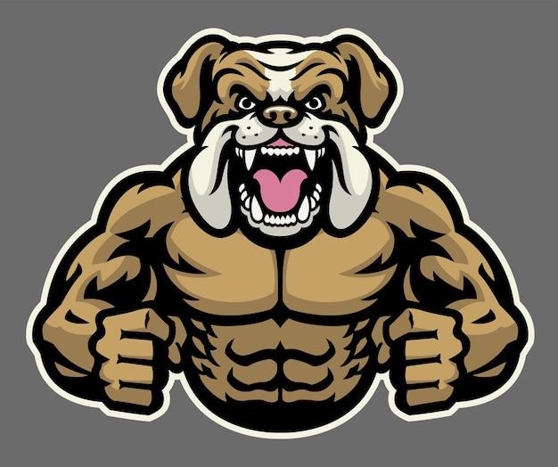 Bulldog arrabbiato muscolare