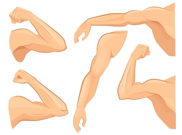 Set di braccia di muscoli
